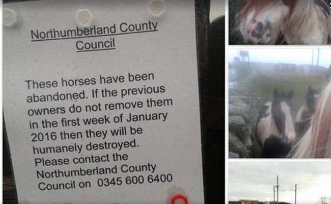 """Northumberland County Council deny leaving note to """"humanely destroy"""" abandoned horses"""