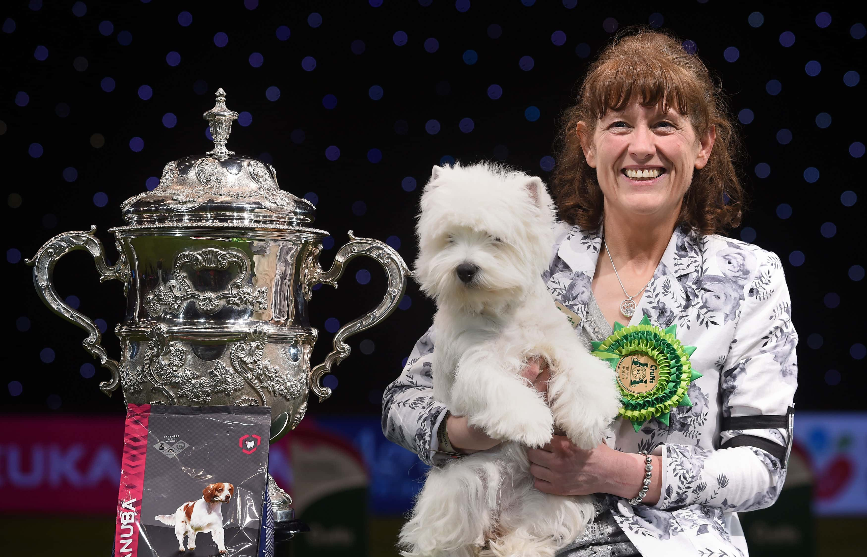 Devon the West Highland Terrier who has been named Best in Show at Crufts 2016 at the NEC, Birmingham.