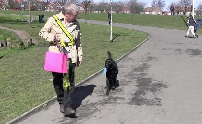 Sunderland park hosts dogs unite sponsored walk