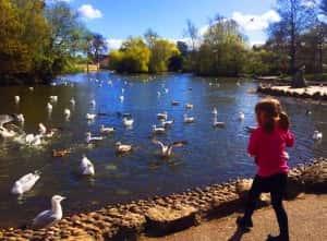 Winter Garden and Mowbray Park
