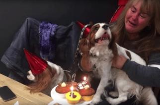 Sunderland's Doggie Diner scoops national Kennel Club award