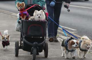 STANDALONE Photo. Dogs with their walkers and pushchairs along the seafront in Tynemouth.