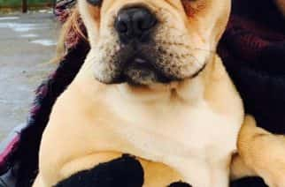 """Hetton equestrian centre owner left feeling """"empty"""" after French Bulldog goes missing"""