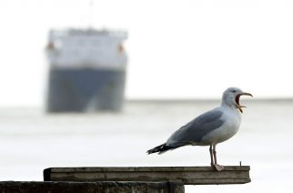 A seagull at the North Shields Fish Quay near Newcastle upon Tyne, as the fleet of boats wait for a break in the weather before they can head out to the North Sea to catch lobsters and prawns.