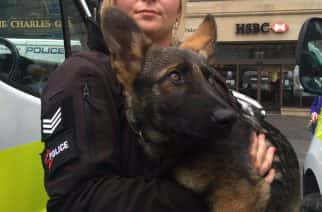 WATCH: Newcastle welcomes new Northumbria Police dog recruits
