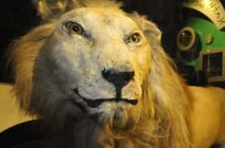 Sunderland Museum and Winter Gardens - Wallace the lion