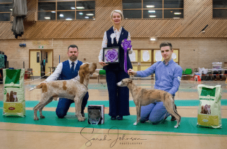 Sunderland and District Canine Society Open Dog Show: local canines compete for Crufts
