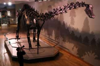 A photographer takes pictures of Dippy, The Natural History Museum's Diplodocus skeleton cast, during a media preview in the Ulster Museum, Belfast, ahead of it opening to the public on Friday as part of the UK tour.