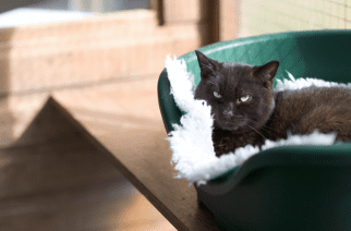 Local charity Cats Protection urgently seeks short term fosterers