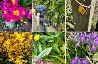 The small gifts of nature: spring flowers which seem like a spring gift from a grateful planet. Photos by Barbara Anderson.
