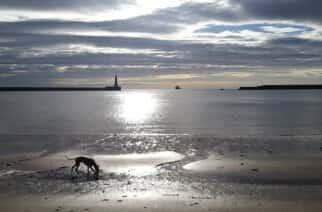 Whippet on Sunderland beach by Lauren Davison