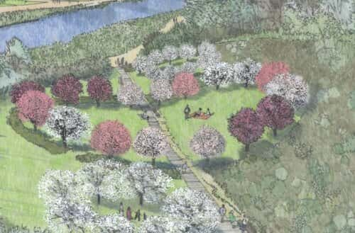 A National Trust impression of how a blossom tree grove might look.