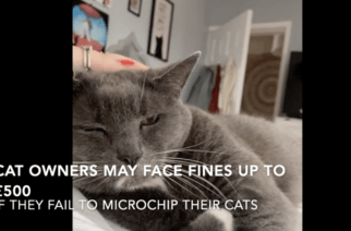 Cat owners may face fines up to £500 if they fail to microchip their cats
